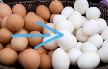 Eggs-poultry-eggs-farm-fresh-white-eggs.jpg_350x350